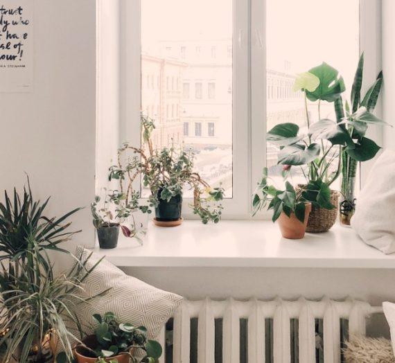 De kracht van de natuur in huis